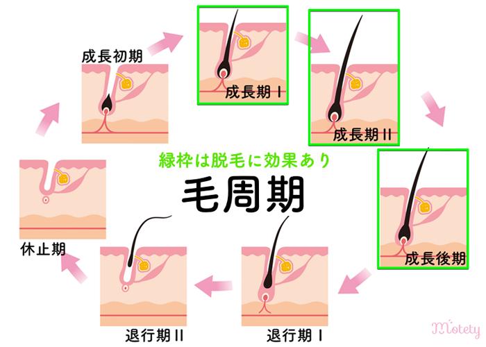 毛周期の解説図